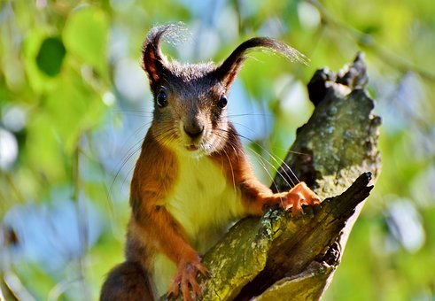 squirrel-3708524__340