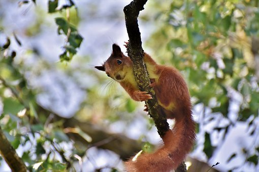 squirrel-4322622__340
