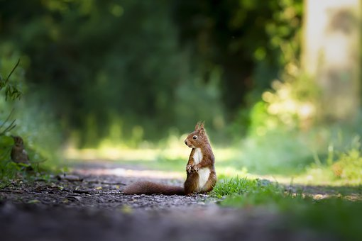 squirrel-4515962__340