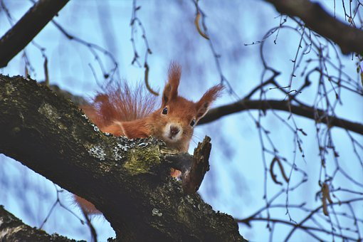 squirrel-5004736__340