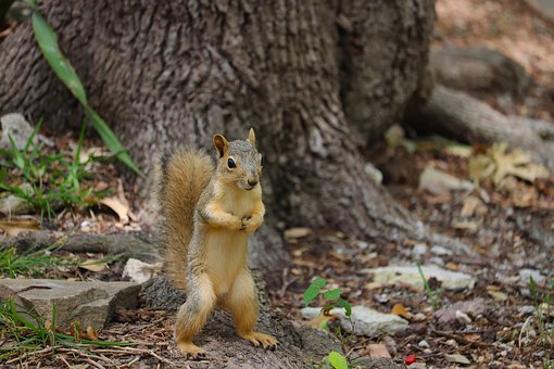 squirrel-5126547__340