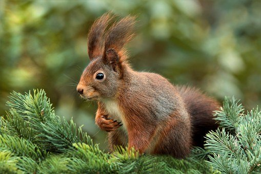 squirrel-619968__340
